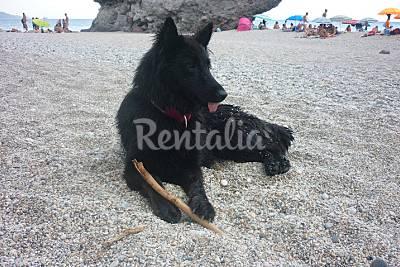 Playa Los Muertos - Photo 1