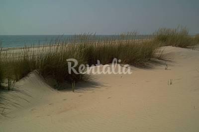 Doñana - Playa del Parque Nac. de Doñana beach