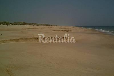 Doñana - Playa del Parque Nac. de Doñana beach - Photo 1