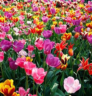 A Primavera chegou