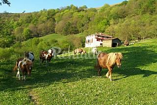 2 Appartamenti con giardino privato Navarra