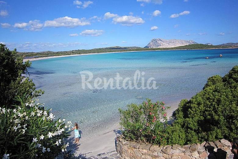 Sulla spiaggia villa in affitto in prima linea lu for San teodoro appartamenti sul mare