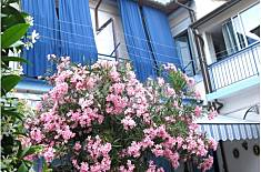 Appartamento in affitto - Lucca Lucca